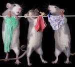 Image Source: http://cl.jroo.me/z3/4/L/d/e/a.baa-Mouse-Laundry.jpg