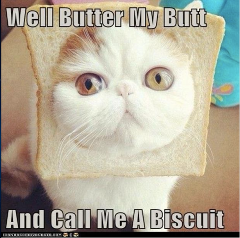 Image Source: http://www.hilarioustime.com/images/04/Well-butter-my-butt-funny-cat-with-bread-on-its-head.jpg