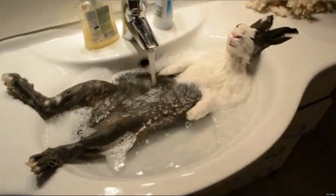 Image Source: http://i.huffpost.com/gen/1180315/thumbs/o-BUNNY-BATH-SINK-facebook.jpg