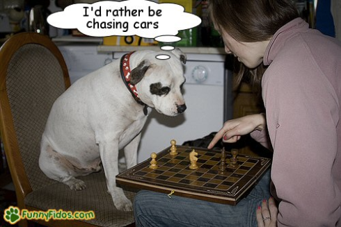 Image Source: http://www.funnyfidos.com/wp-content/uploads/2010/06/funny-dog-picture-rather-be-chasing-cars.jpg