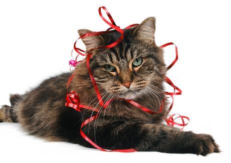 Image Source: http://gooddogcoaching.com/wp-content/uploads/2014/12/xmas-cat-w-ribbon.jpg
